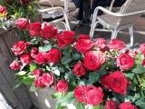 kfd-Fahrt zum Rosenfestival in Lottum