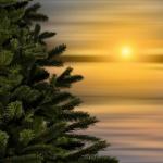 Tannenbäume einsammeln der Messdiener